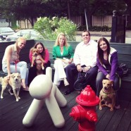 ROI Staffing's bring your dog to work day!